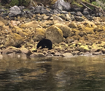long beach charters in ucluelet